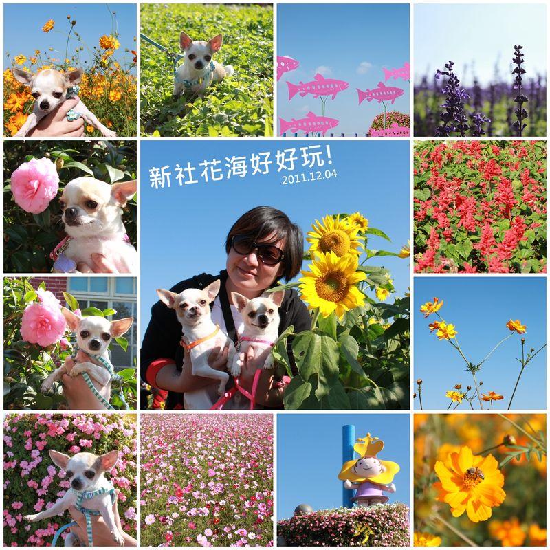 20111204_flowers